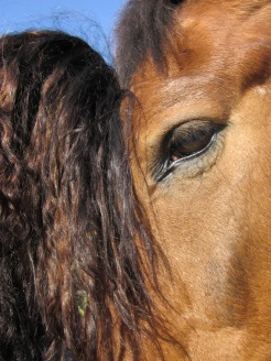 Horse human connection mental health